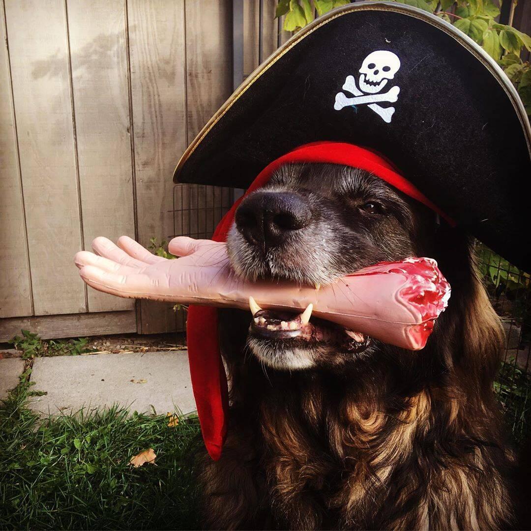 Pirata - Foto @happyleolife