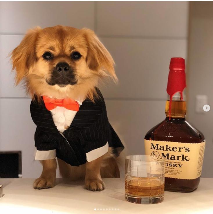 Bartender - Foto @puppyinbrooklyn