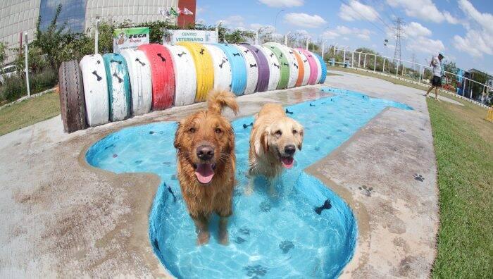 Cachorros na Piscina do PlayPet - Foto Prefeitura de Suzano