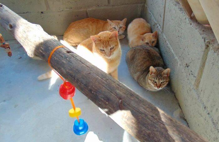 Gatil construído no CDP de Taubaté tem capacidade para receber até 50 animais - Divulgação/SAP