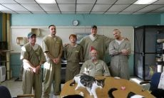 Gatos e presidiários no presídio de Pendleton, Indiana, EUA