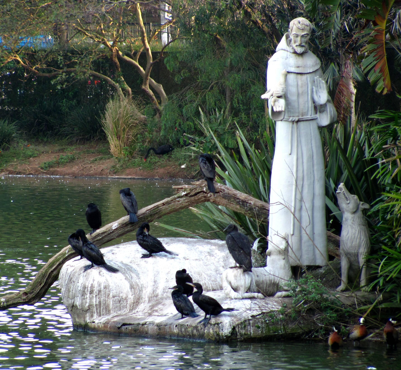 Imagem de São Francisco no Zoológico de São Paulo - Foto Wikimedia Commons