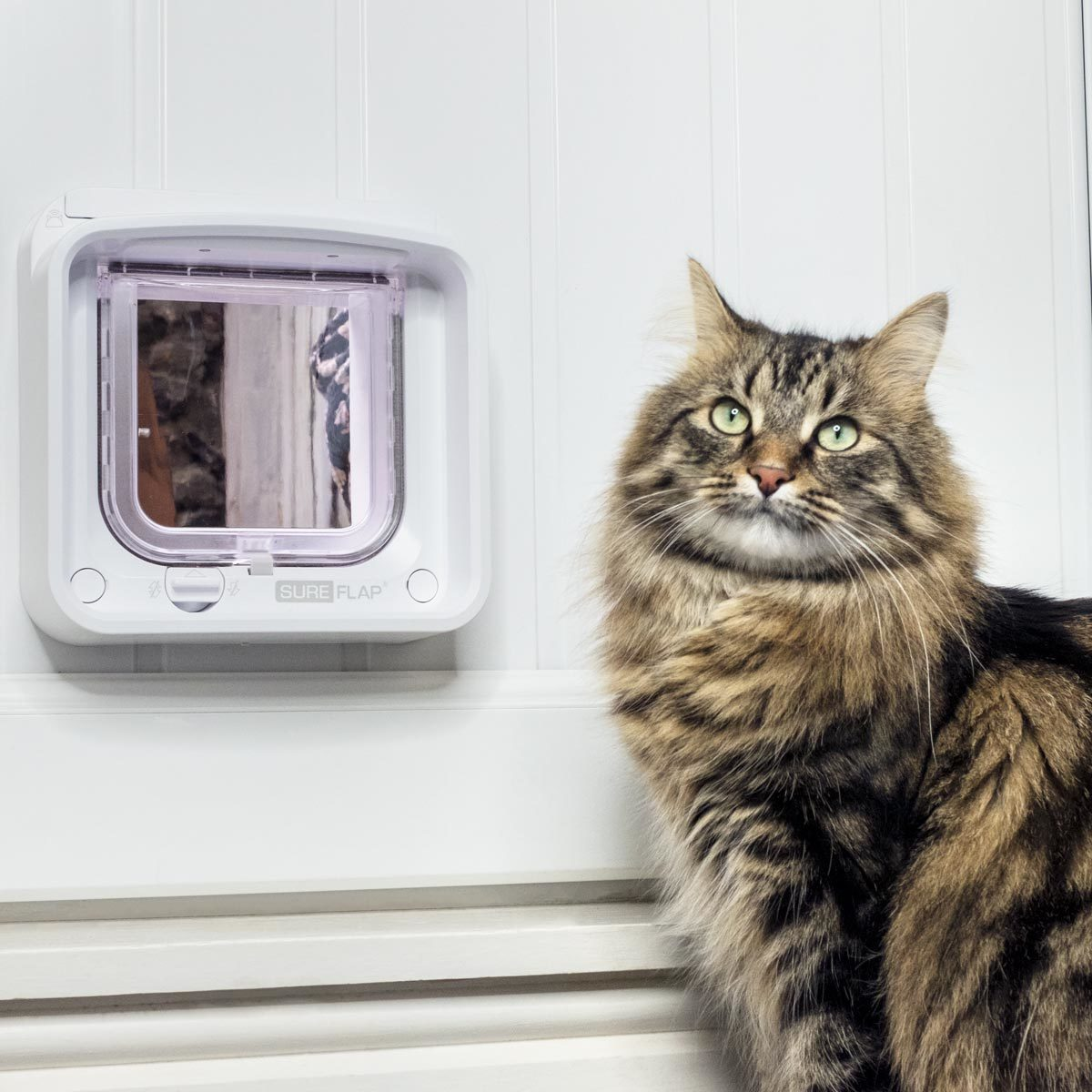 Porta inteligente SureFlap Microchip Cat Door Connect with Hub Value Bundle - Foto Divulgação