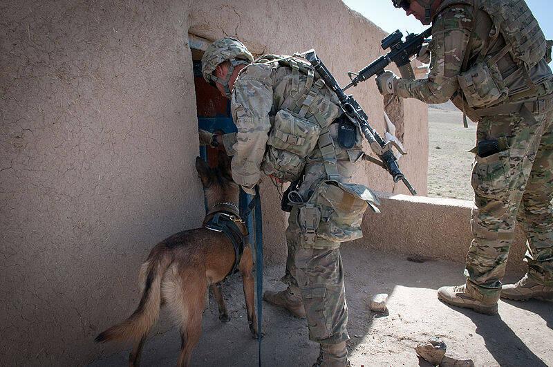 Pastor belga malinois participa de busca e captura no Afeganistão - Foto US Army