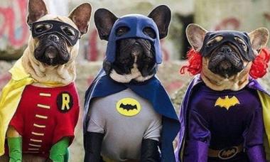 Robin, Batman e Batgirl - Foto @relicariocasar