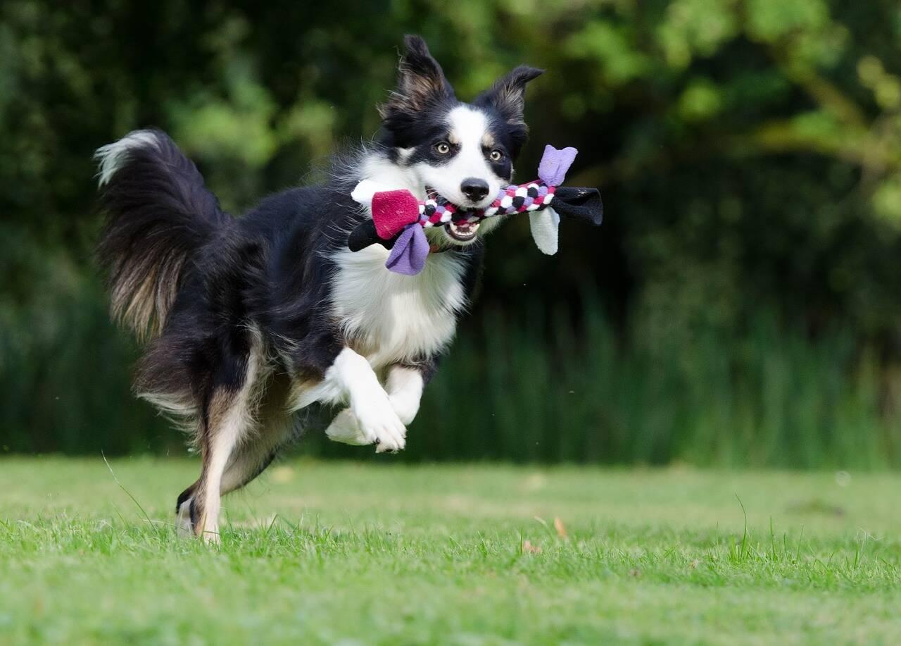 Cão mastigação - Foto Pixabay