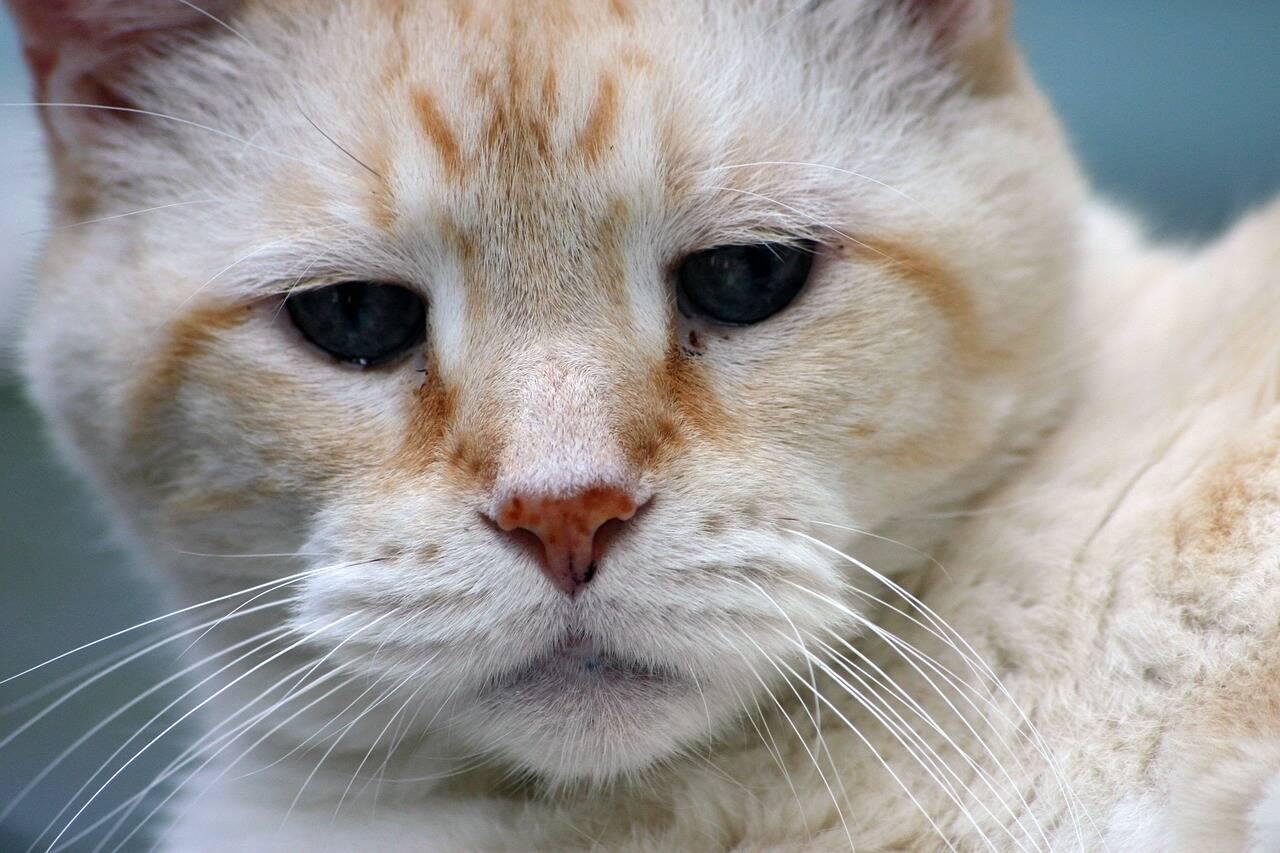 gato velho - Foto Pixabay