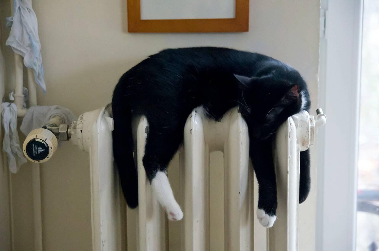 gato no aquecedor - Foto Pixabay