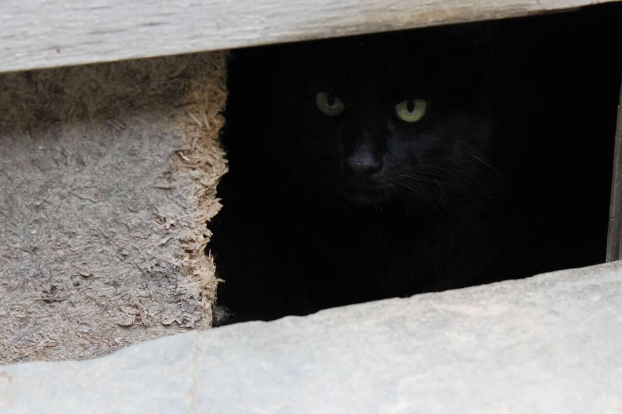 Gato escondido esconderijo - Foto Pixabay