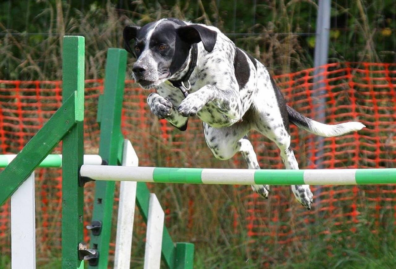 Cão treinamento - Foto Pixabay