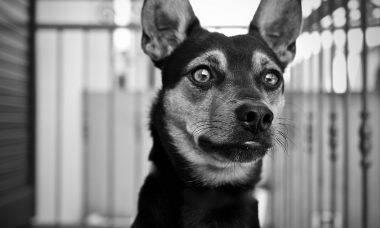 Cão orelha otite - Foto Pixabay