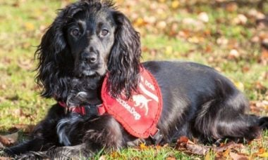 Molly, a cadela detetive - Foto: Collin Butcher