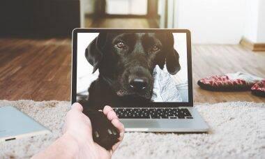 Cachorro computador - Foto Pixabay