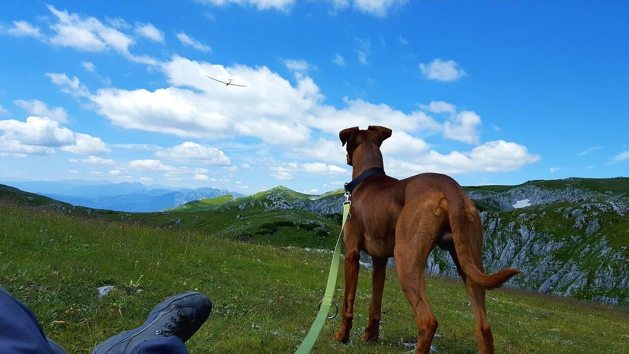 Cão passeio - Foto Pixabay