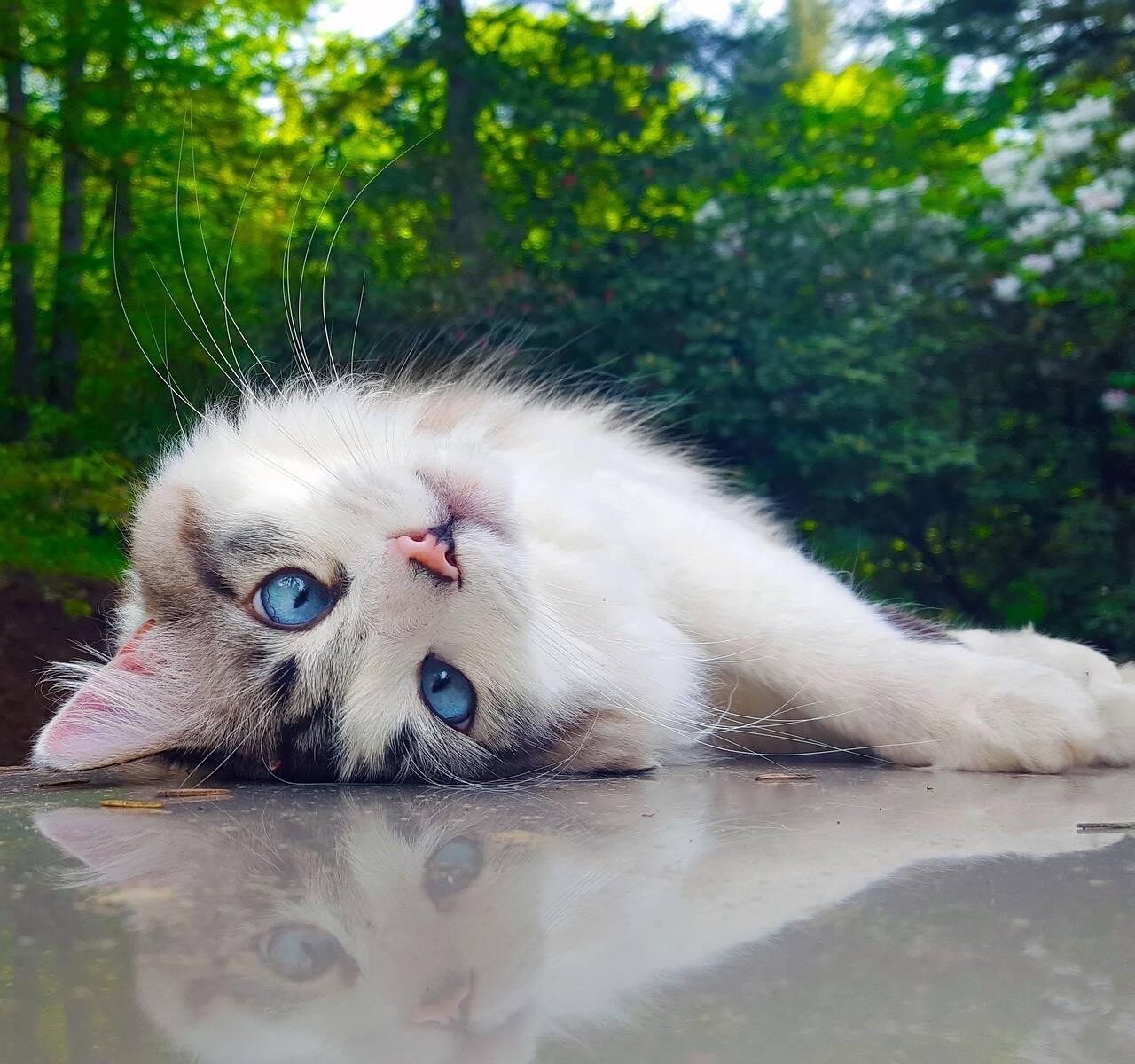 Gato engraçado - Foto Pixabay
