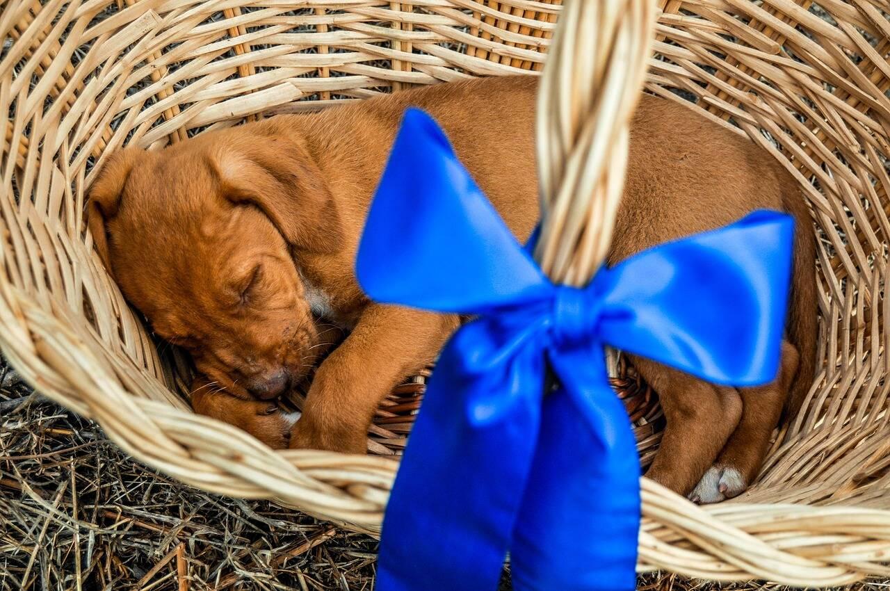 cachorro presente - Foto Pixabay
