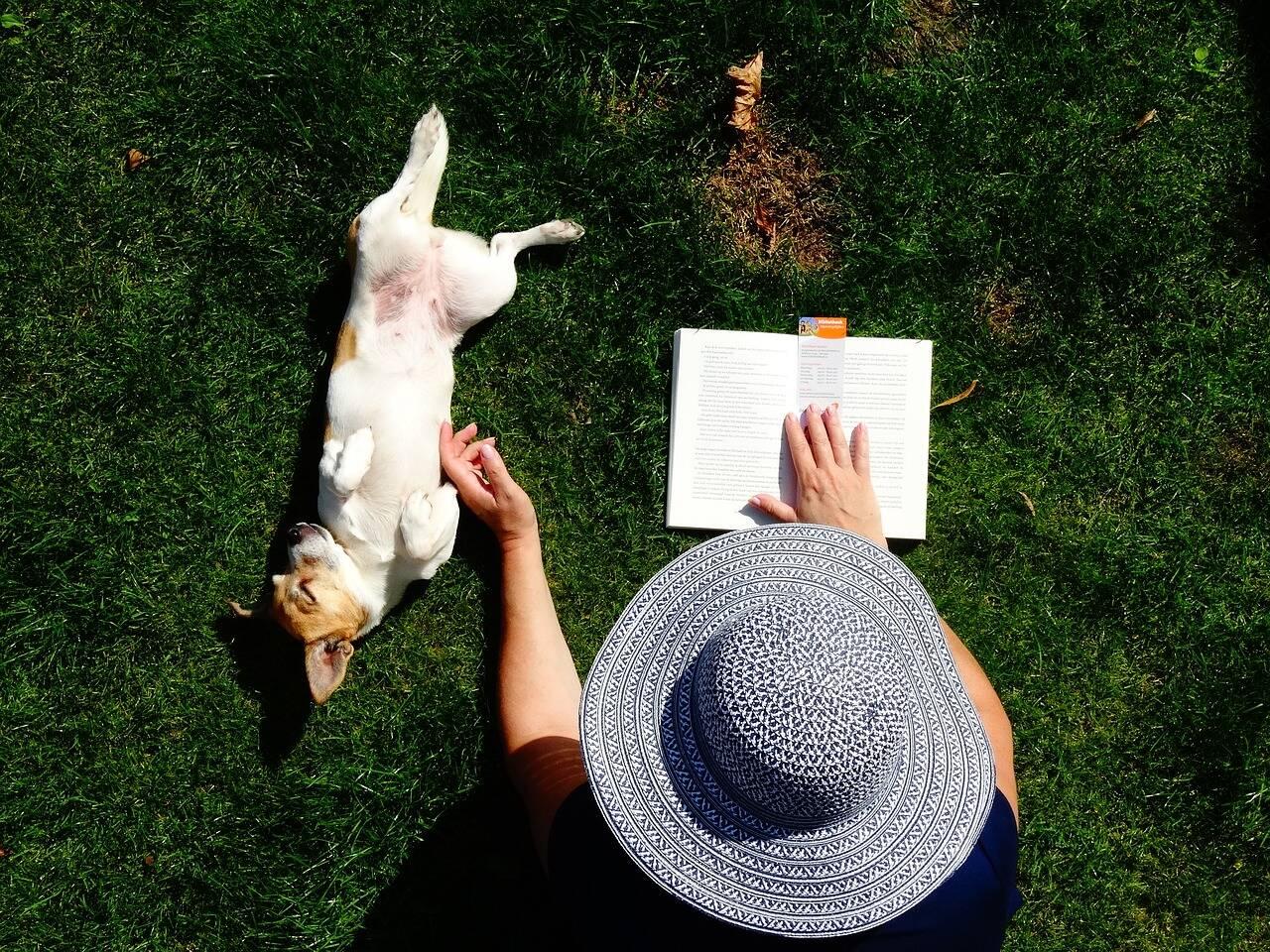 Cão livro - Foto Pixabay