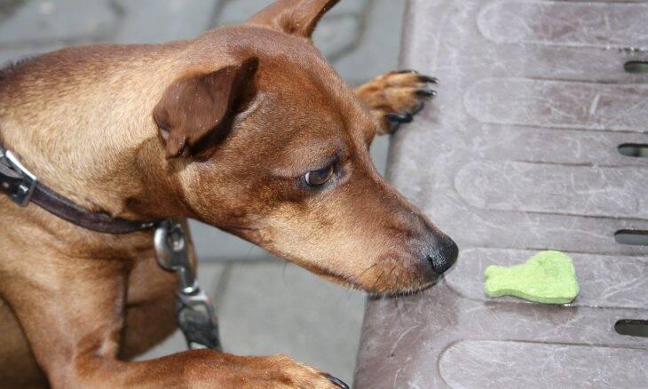 cachorro ração - Foto Pixabay