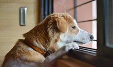 Cão sozinho em casa - Foto Pixabay