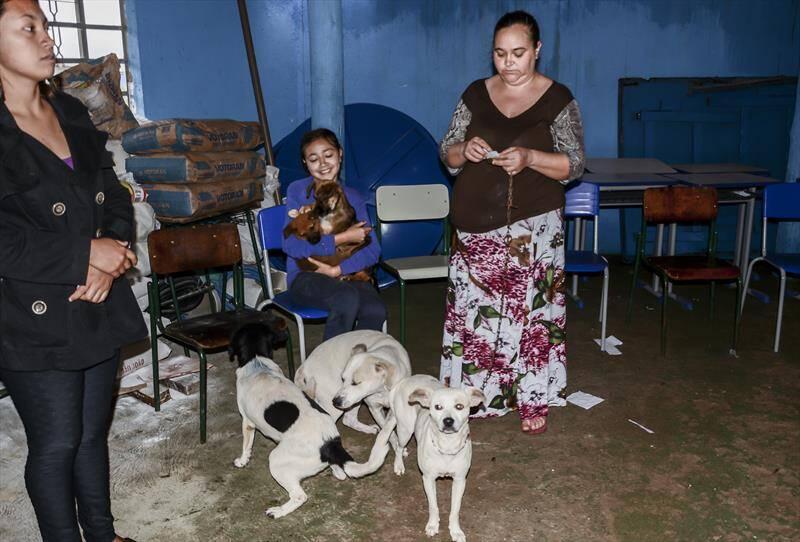 Cães de aldeia indígena no Paraná - Foto Prefeitura de Curitiba