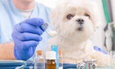 Cão homeopatia - Foto Medwayvet