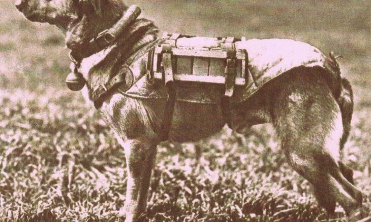 Cão bomba soviético - Foto Militaria RG