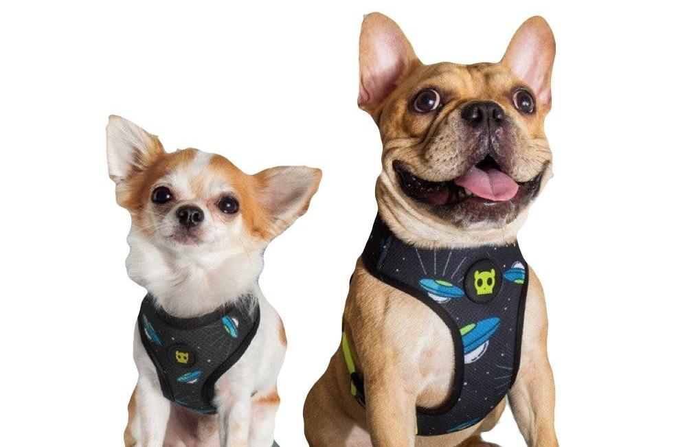 Os charmosos peitorais da Zee Dog também devem fazer parte da promoção - Foto Divulgação