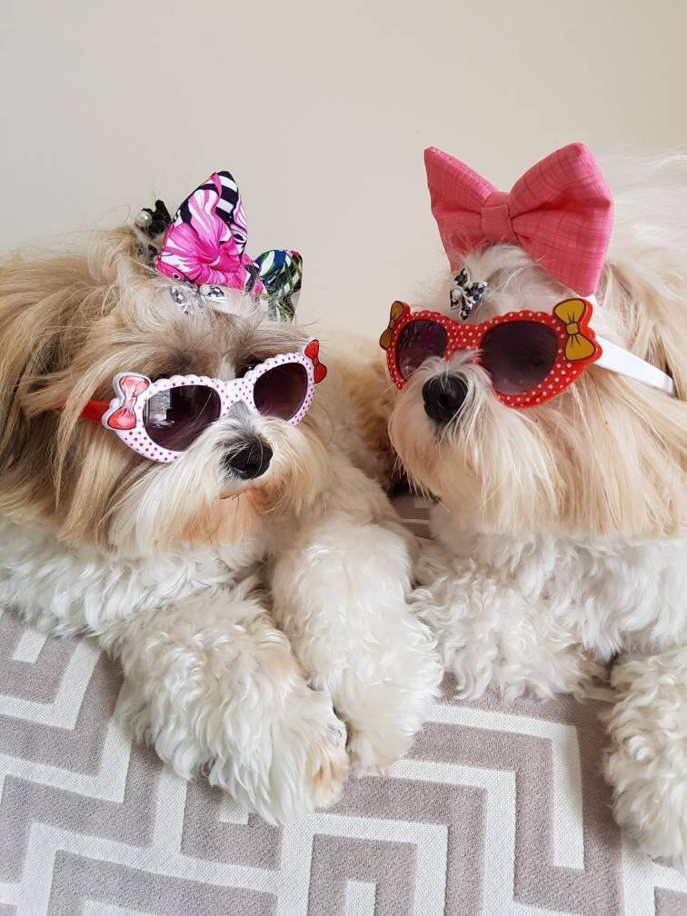 As cadelas Penelope e Julie, estrelas do Pet Family Market - Foto Divulgação