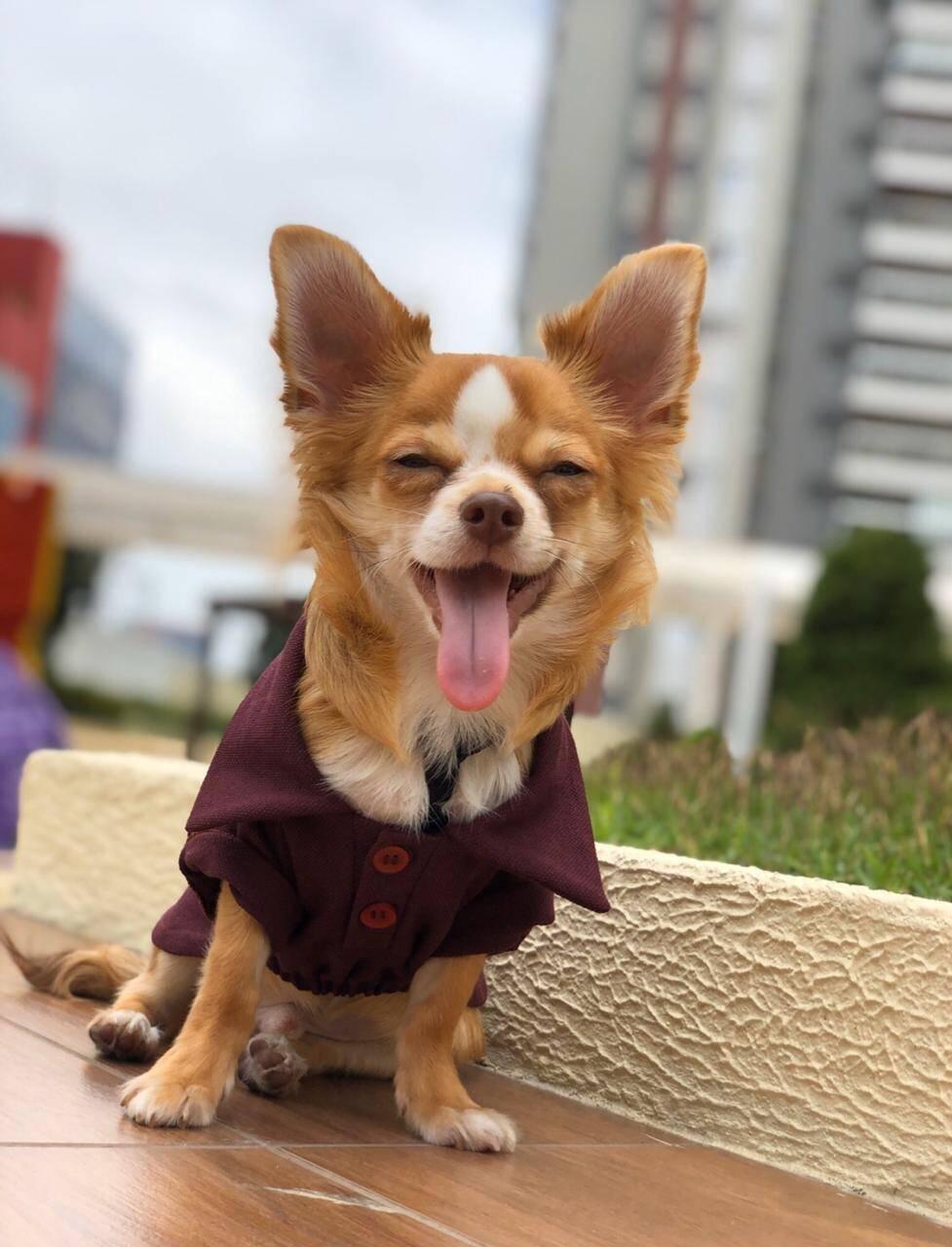 O cachorrinho Plinio, uma das estrelas do Pet Family Market - Foto Divulgação