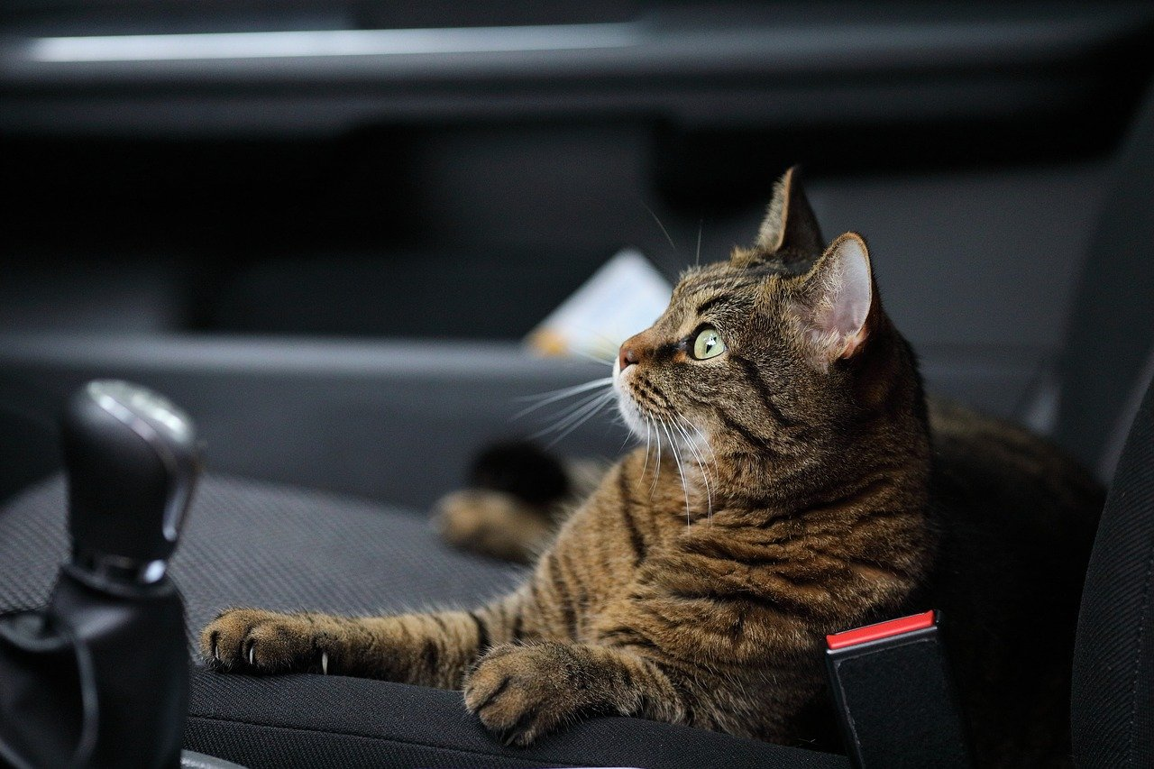 gato carro - Foto Pixabay