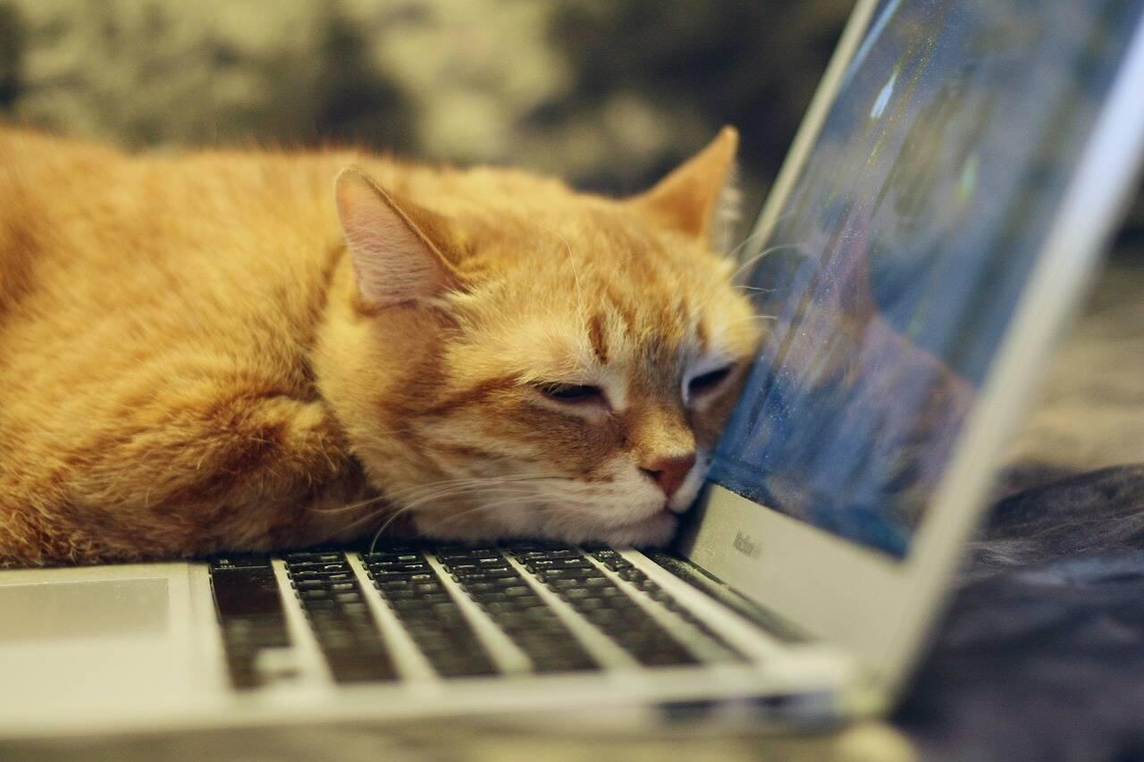 gato computador - Foto Pixabay