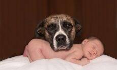 cão e bebê - Foto Pixabay