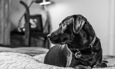 cachorro quarto - Foto Pixabay