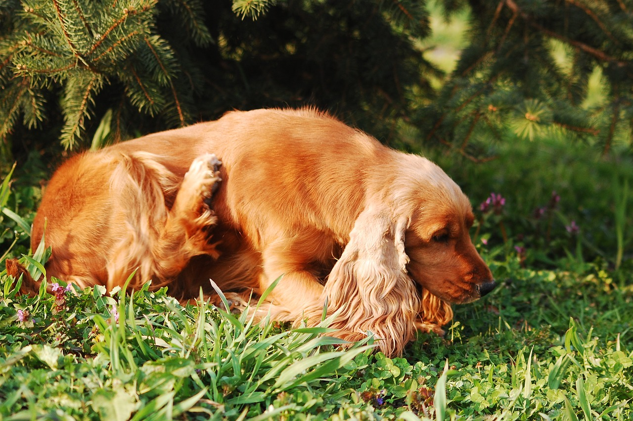 cachorro cão coceira parasita pulga carrapato - Foto Pixabay