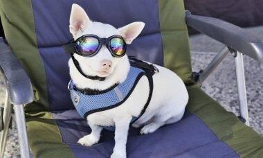cachorro cão verão óculos escuros - Foto Pixabay