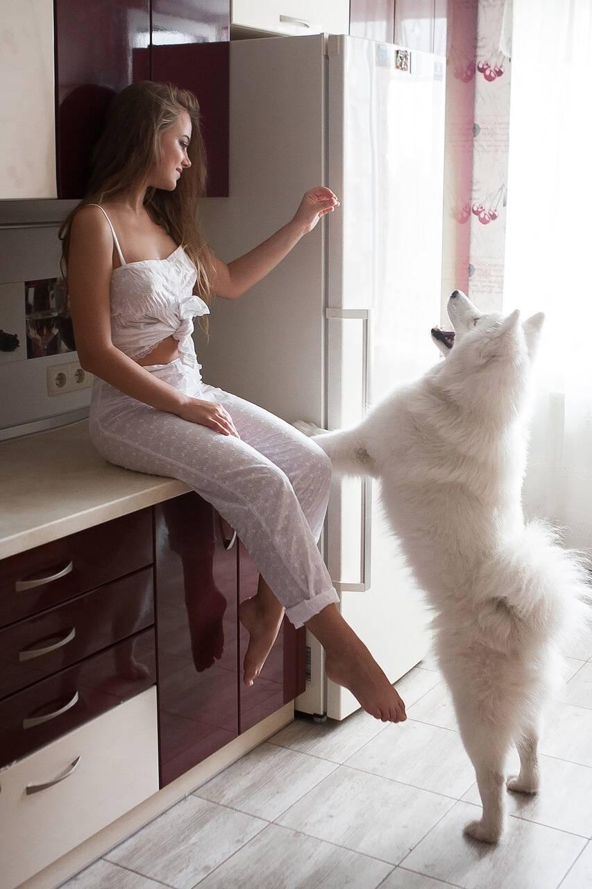 cachorro cozinha - Foto Pixabay