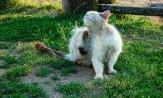 Gato de rua - Foto Pixabay