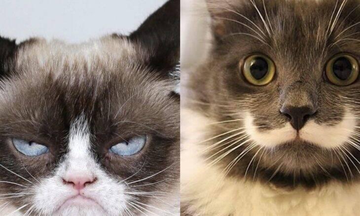 Grumpy Hamilton gatos - Foto Instagram