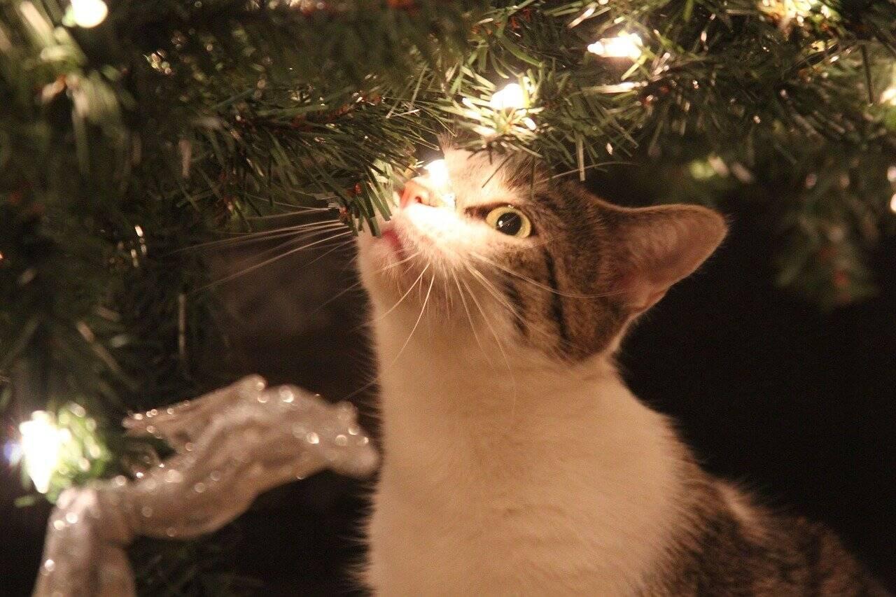 Gato Natal - Foto Pixabay