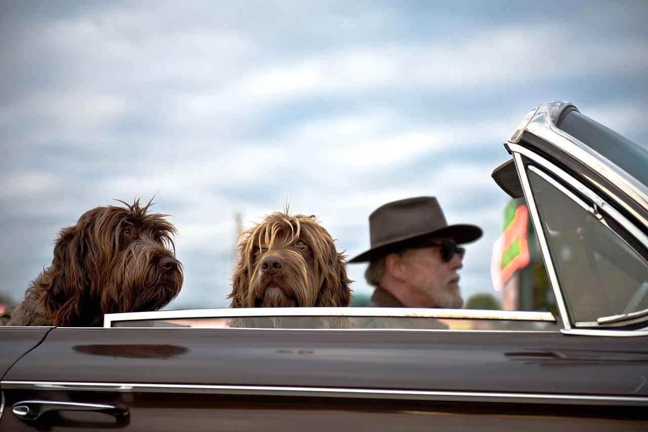 cachorro cão passeio viagem carro - Foto Pixabay
