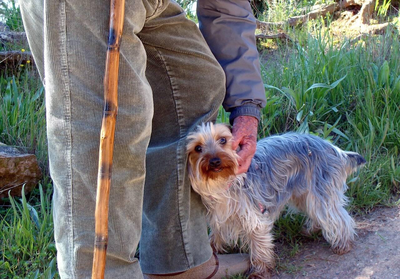 Idoso cão - Foto Pixabay