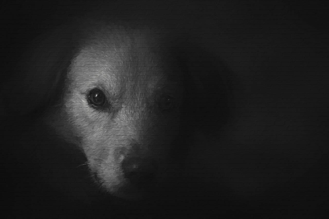 cão de rua - Foto Pixabay