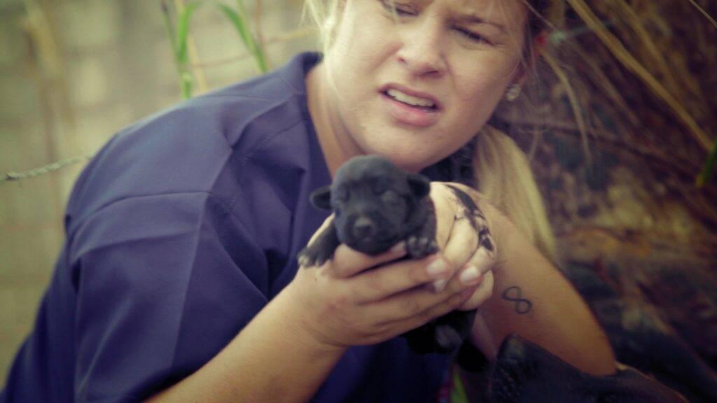 Programa Resgate Pet, da RedeTV - Foto Divulgação