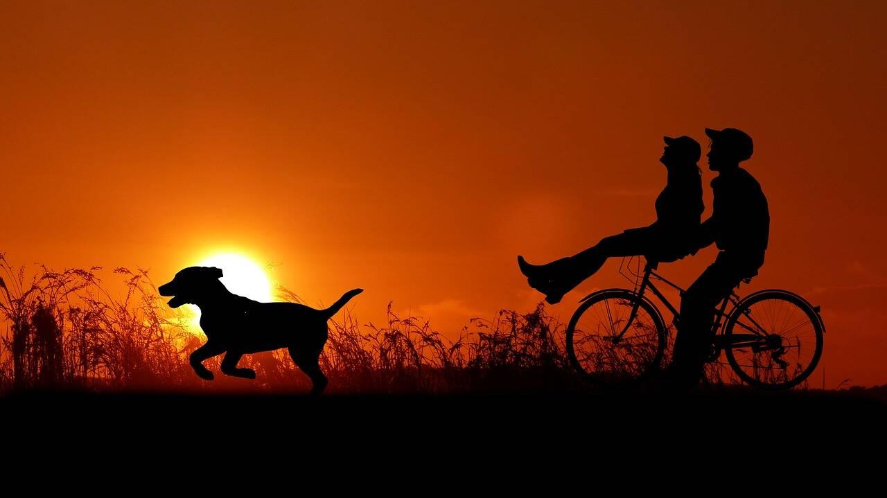 cão cachorro passeio - Foto Pixabay