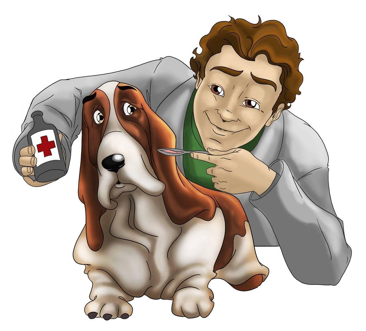 Veterinário remédio cão - Foto Pixabay