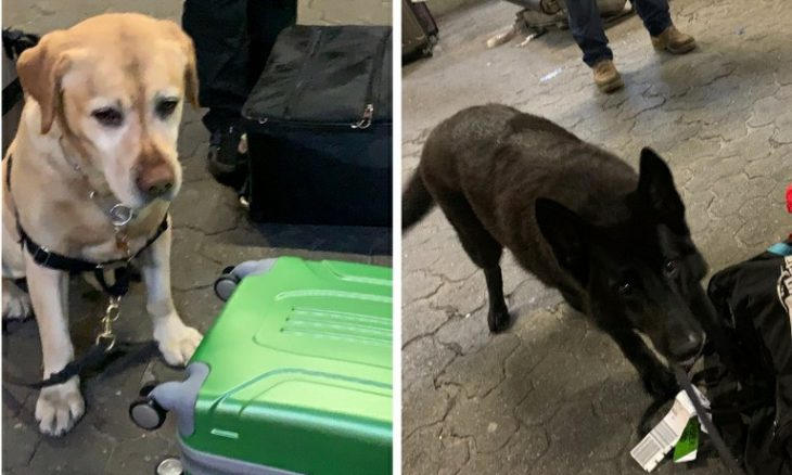 Cães farejadores descobrem cocaína no aeroporto de Guarulhos - Foto Receita Federal