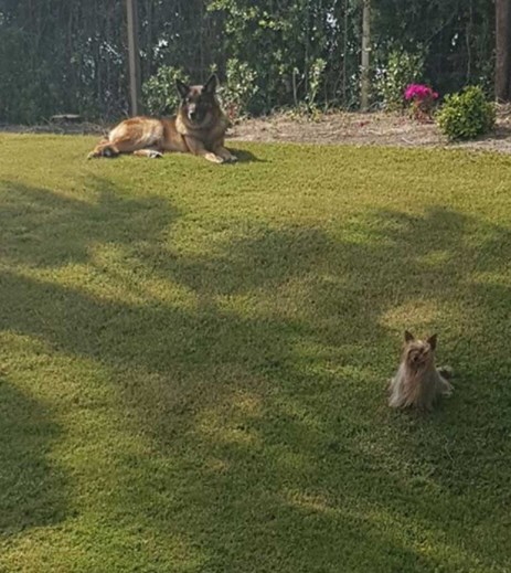 Os cães de José Mourinho, Leya e Jack - Foto Instagram