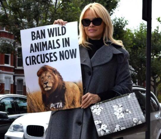 Pamela Anderson faz campanha contra animais em circos - Foto Facebook
