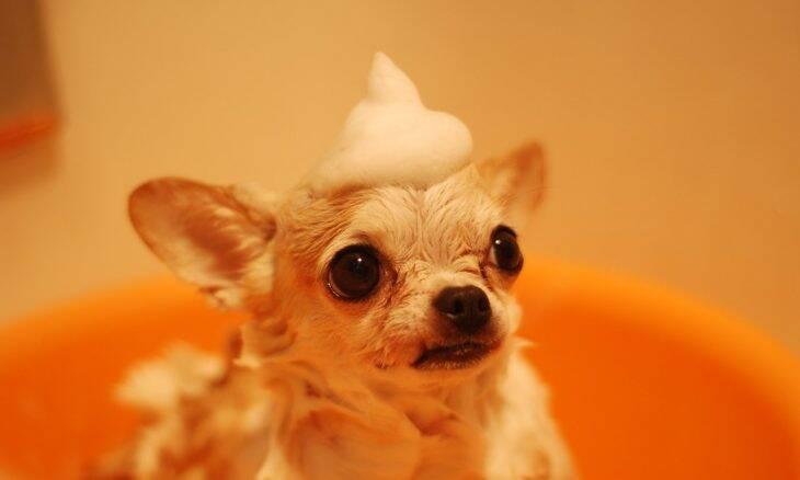 cão banho - Foto Pexels