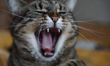 Gato dor - Foto Pixabay